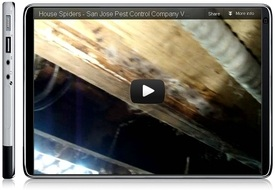 Video still image of House Spiders in California